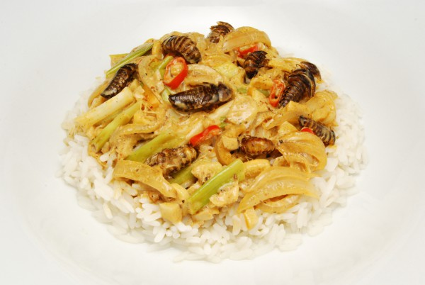 Schaben mit Gemüse auf Reis